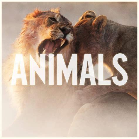 maroon 5 personnel maroon 5 animals music video ℰllie