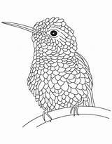 Hummingbird Coloring Printable Bird Drawing Hummingbirds Kolibri Realistic Ausmalbilder Bee Coloring4free Everfreecoloring Epic Getdrawings sketch template