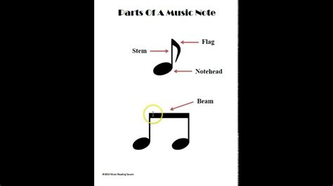 What Are The Parts Of A Music Note? Youtube