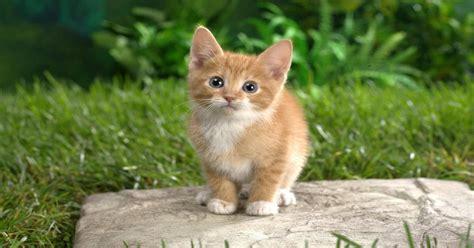 Hey Look At This Cute Cat 1920 X 1080 Wallpaper