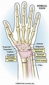 Wrist Pain Radial Side