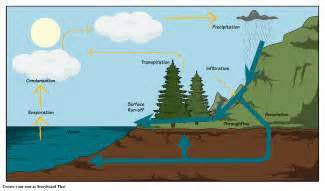 The Water Cycle Diagram Pdf by The Water Cycle Diagram Storyboard By Oliversmith