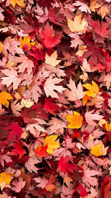 Fall Iphone Wallpaper Leaves by Best 25 Fall Wallpaper Ideas On Fall