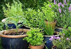 Erde Für Kräuter : obi informiert das brauchen sie zum anbau der ~ Lizthompson.info Haus und Dekorationen