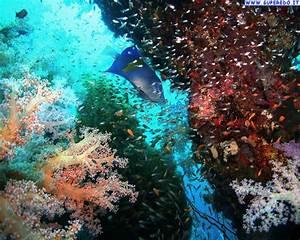 Sfondi Barriere Coralline Animate Joy Studio Design