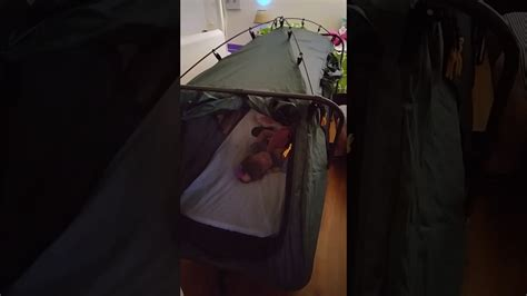 Glo's Special Needs Travel Bed A Camp Rite Tent Cot