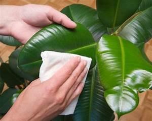 Zimmerpflanzen Alte Sorten : zimmerpflanzen pflege im winter mein sch ner garten ~ Michelbontemps.com Haus und Dekorationen