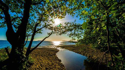 bäume schneiden im sommer die 66 besten hintergrundbilder mit der natur dem sommer und strand