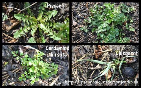Liste Mauvaises Herbes Jardin by Nettoyage Des Massifs Les Chroniques De Mon Jardin