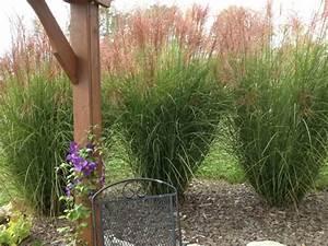 Gräser Im Garten : dekorative gr ser im garten wissenswertes und praktische ~ Lizthompson.info Haus und Dekorationen
