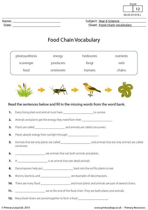 science food chain vocabulary worksheet primaryleapcouk