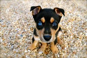 Top 10 Cute Dog Breeds You Can't Resist – Top Dog Tips