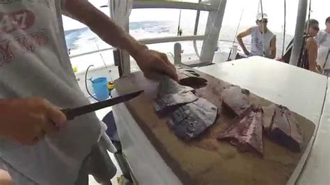 bait grouper snapper cut bonito