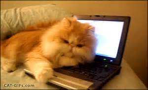 typing cat cat your laptop keyboard is warm so it s my new