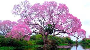 top 10 amazing trees in the world