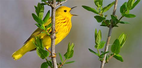 ¿Por qué los pájaros cantan más en primavera?
