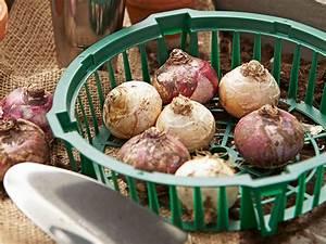 Lbs Bauspartarife übersicht : tipps zu den sch nsten zwiebelblumen dehner ~ Lizthompson.info Haus und Dekorationen