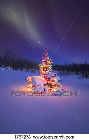 pictures   christmas tree glowing  night
