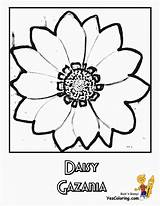 Flower Daisy Coloring Pages Flowers Daisies Colour Sheets Yescoloring Ten Bountiful sketch template