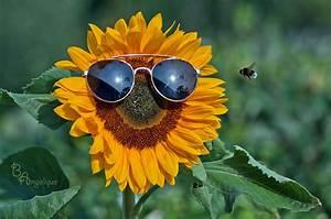 Bilder Gute Laune : sommer sonne gute laune foto bild pflanzen pilze flechten bl ten kleinpflanzen ~ Frokenaadalensverden.com Haus und Dekorationen