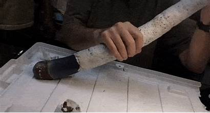 Shipworm Giant Shipworms Gifs Found Magnificent Heavier