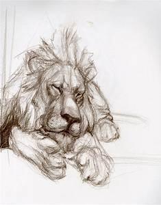 Candace Giancanelli: Animal Drawings