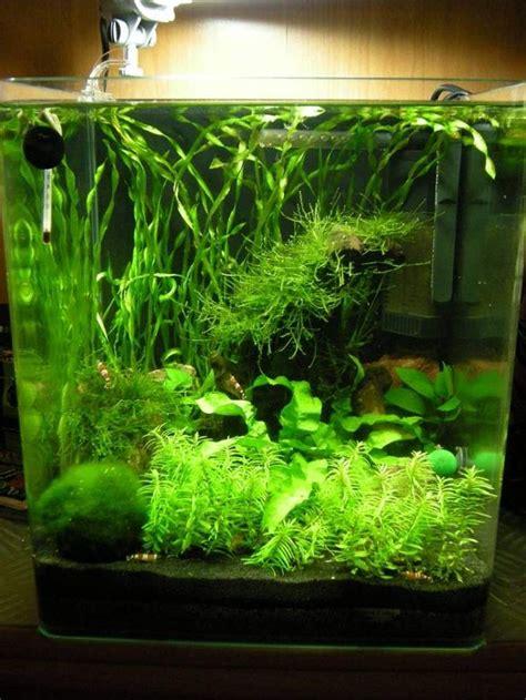 fische kleines aquarium die besten 25 kleines aquarium ideen auf fisch peiltabelle kleine aquarien und diy