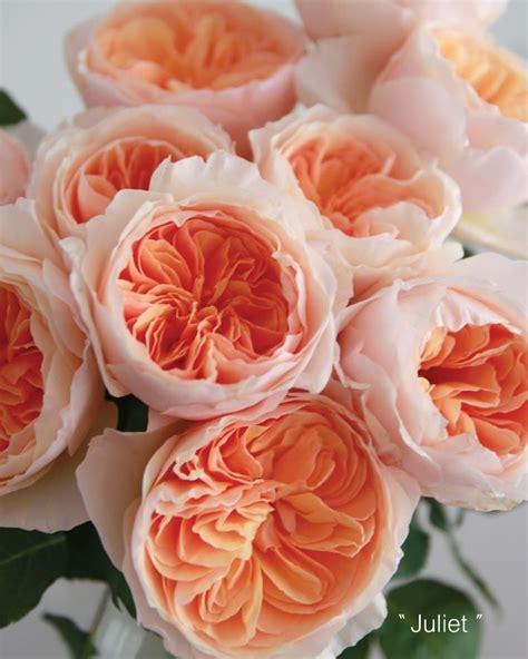~david Austin Peach Juliet Garden Roses ♥ A Thousand Times
