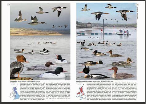 best 28 water bird identification sunnys wildlife on