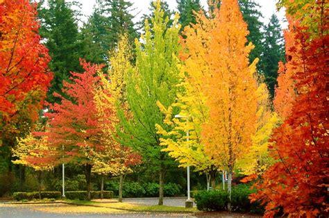 of autumn colours of autumn