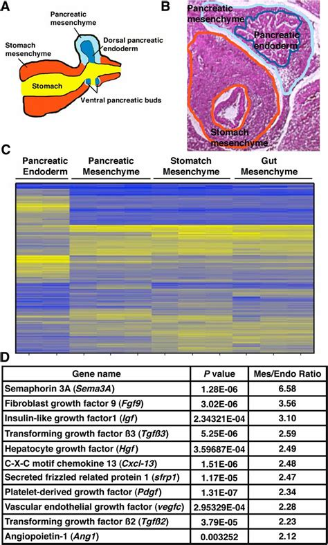 factors expressed  murine embryonic pancreatic