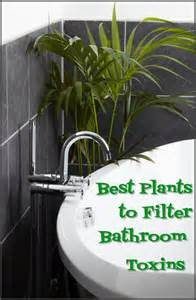best houseplants to filter toxins in your bathroom mom
