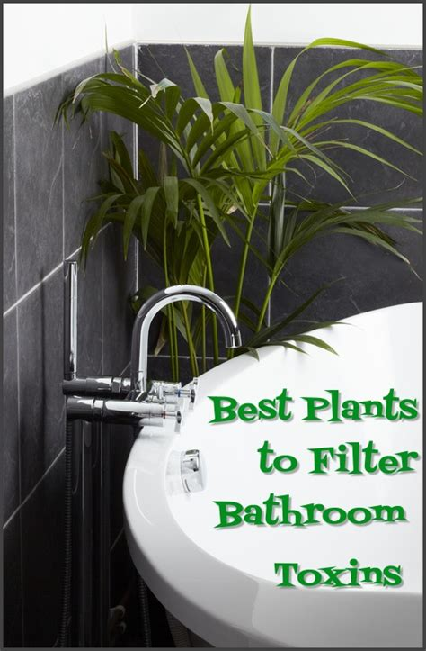 Best Plant For Bathroom Australia by Bathroom Plants On Plants In Bathroom