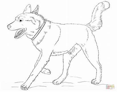 Husky Coloring Pages Dog Siberian Printable Realistic