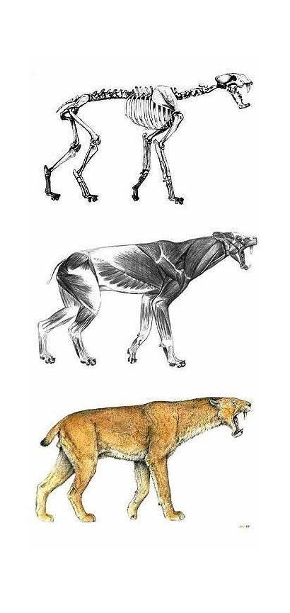 Homotherium Animal Animals Prehistoric Extinct Visit Process