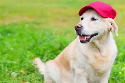 Dog Names Baseball Related Female Daily Male