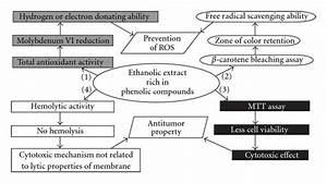 Free Radical Scavenging  Cytotoxic And Hemolytic