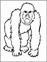 Gorilla Coloring Animal Zoo Ape Printable Animals Templates African Five Sheets Safari Printables Clipart Clipartpanda Cliparts Adult Sheet Outline Popular sketch template