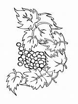 Coloring Grape Grapes Fruits Printable Recommended sketch template