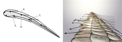 felix schaller der bionische fluegel