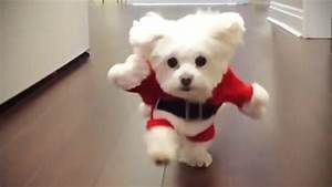 Funniest DOGS IN COSTUMES 2017 [Funny Pets] - YouTube
