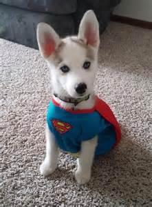 Husky Puppy Costume for Dog
