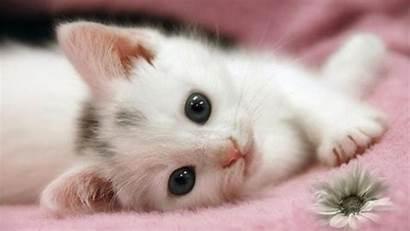 Adorable Cat Wallpapers Cats Kittens Kitten