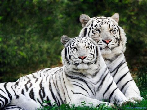 Photos Of Animals Free  Beautiful Wild Animals Desktop