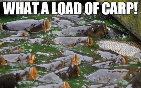 fishgo fish pun memes natashadowlingportfolio