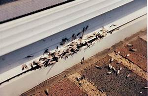 Protecting Your Home From Termite Damage - Island