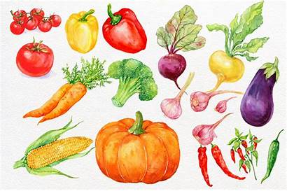 Vegetables Clipart Watercolor Painting Veggie Background Example