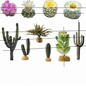 Second Life Marketplace - Desert Plants FULL PERM