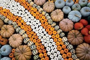 Ingredient, Of, The, Season, Pumpkins