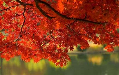 Fall Autumn Leaves Wallpapers Backgrounds Screensavers Leaf